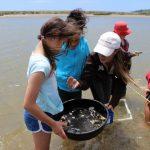 Maketu Estuary Shellfish Survey 2018