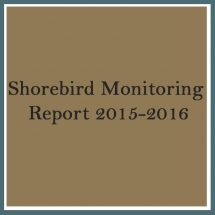 Shorebird 2015 2016